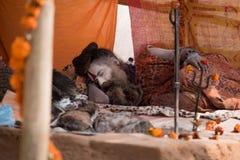Sadhu sleep Royalty Free Stock Image