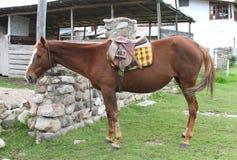 Sadla upp en häst Arkivfoto