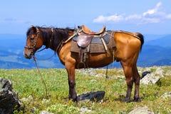 sadlad häst Arkivfoton