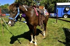 Sadlad ponny som fästas till en karusellridningstation Arkivbild