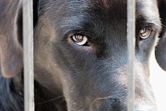 Sadness black dog in fence Stock Photo
