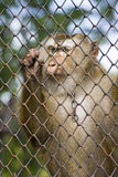 Sadness Of Captivity Stock Photo