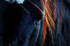 Horse sadness. Close up into the  sad eye of a black horse Stock Photography