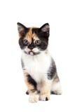 Sadness kitten sits Royalty Free Stock Photos