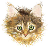 Sadness kitten, vector. Fluffy and sad young cat or kitten Royalty Free Stock Images