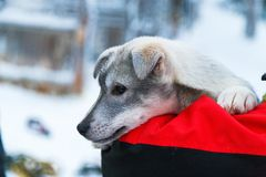 Sadness puppy Stock Photos