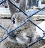Sadness of rabbit. His sad eyes Stock Image
