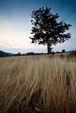 Sadness tree in the field Stock Images