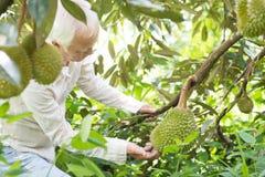 Sadu właściciel i durian drzewo obrazy royalty free