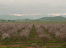 Sady San Joaquin dolina fotografia stock