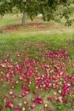 Sady w Quebec w jesieni Obraz Royalty Free