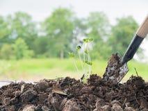 sadzonkowy dorośnięcie w ziemi z zupełną kopaliną obraz stock