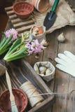 Sadzonkowy ogrodowych narzędzi żarówek gladiolusa hiacynt Fotografia Royalty Free
