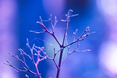 Sae da p-árvore é visto não somente na malha da aranha foto de stock royalty free
