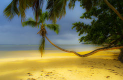 At a saeaside. Nice palm tree at a beach Stock Photo