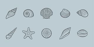 Seashells illustration line icon set vector illustration