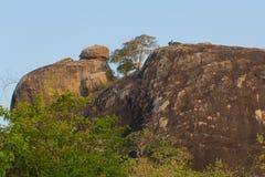 Safai in the Yala Nationalpark Royalty Free Stock Photos