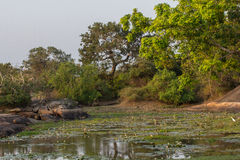 Safai in the Yala Nationalpark Stock Photography