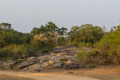 Safai in the Yala Nationalpark Royalty Free Stock Photography