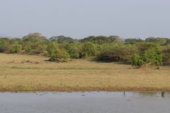 Safai in the Yala Nationalpark Stock Photos