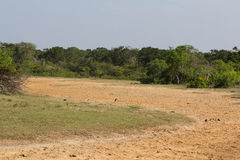 Safai in the Yala Nationalpark Stock Image