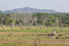 Safai in the Yala Nationalpark Royalty Free Stock Images