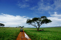 On Safari. In Tarangire National Park in Tanzania Stock Image