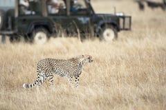 Safari Fotografía de archivo