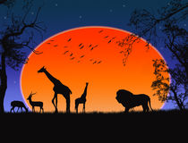 Safari. Silhouettes of wild animals, vector background Stock Photos