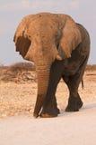 safari fotografering för bildbyråer