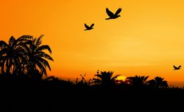 Safari. A beautiful sunset scenery with palm trees and birds Stock Image