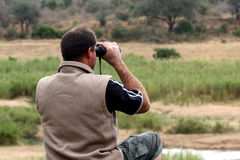 safari Zdjęcia Royalty Free