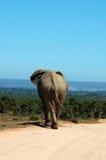 safari Obraz Stock