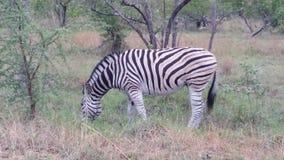 safari Royalty-vrije Stock Foto's