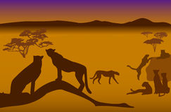 Safari-5. Silhouettes of cheetahs in savanna Royalty Free Stock Images