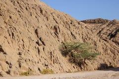 safari Images libres de droits