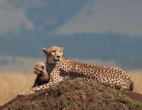 On safari Royalty Free Stock Photo
