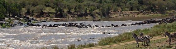 safari Photographie stock libre de droits