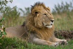 safari Arkivfoton