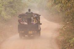 safari arkivbilder