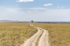 safari Royaltyfria Bilder