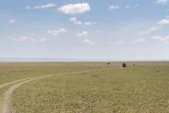 safari Image libre de droits