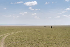 safari Royaltyfri Bild