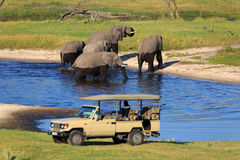 safari Immagini Stock Libere da Diritti