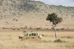 On safari Stock Images