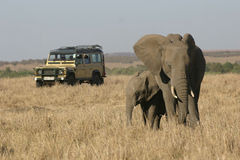 On Safari in Africa Royalty Free Stock Photography