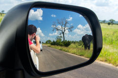 Safari in Africa, man in car making photo of elephant Stock Photography