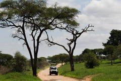 Safari in Africa. Safari in Tarangire National Park, Tanzania royalty free stock images