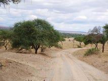Safari in Africa Tarangiri-Ngorongoro. Jeep, road, road to paradise, travel, jeep ride, jeep safari, guide, trees in Africa, safari in Tanzania, savanna in stock photography