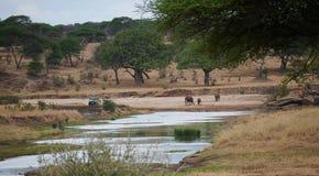 Safari in Africa Tarangiri-Ngorongoro. Jeep, road, road to paradise, travel, jeep ride, jeep safari, guide, trees in Africa, safari in Tanzania, savanna in royalty free stock images
